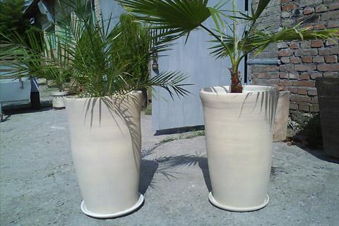 Саксии за палми
